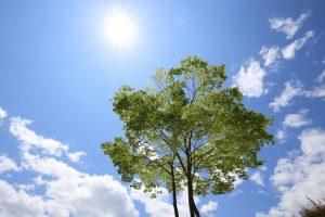 日光浴する樹木