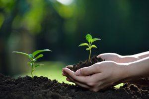 成長していく作物