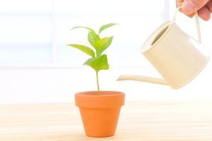 元気な植物